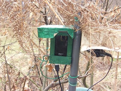 Le videocamere nascoste negli alberi